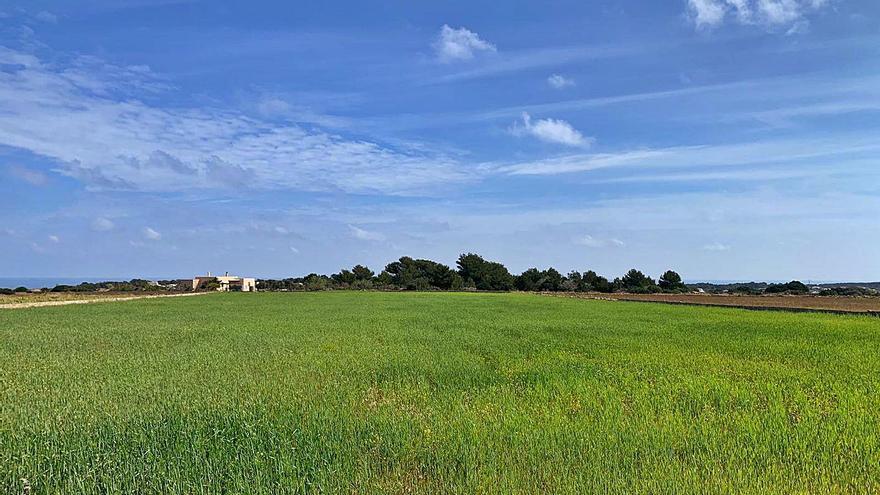 Formentera suma 24,5 hectáreas de campos de cultivo a su fondo de tierra
