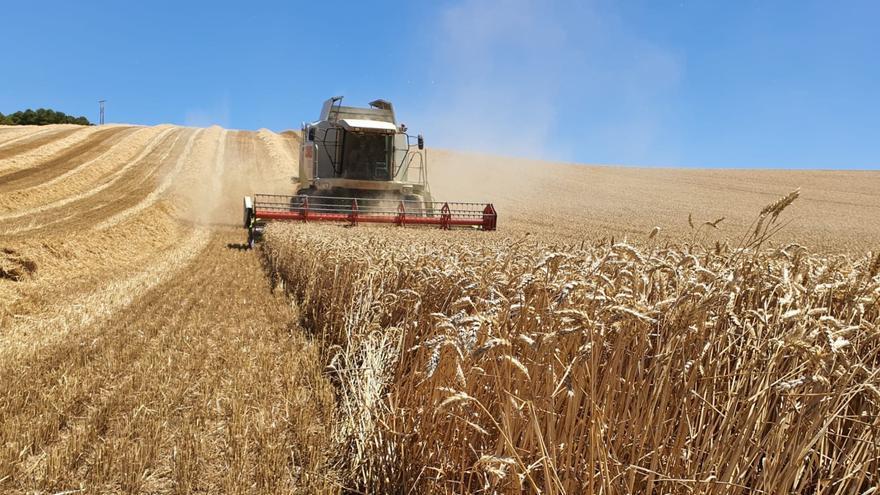 Lonja Agropecuaria de Zamora: semana alcista para los cereales