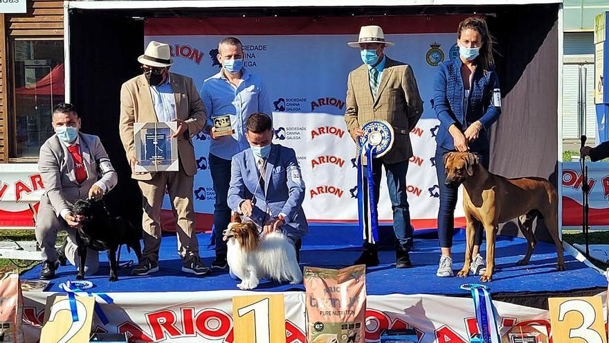 El spaniel continental enano 'Graceross Zalomes Biforis' gana la exposición canina de Silleda