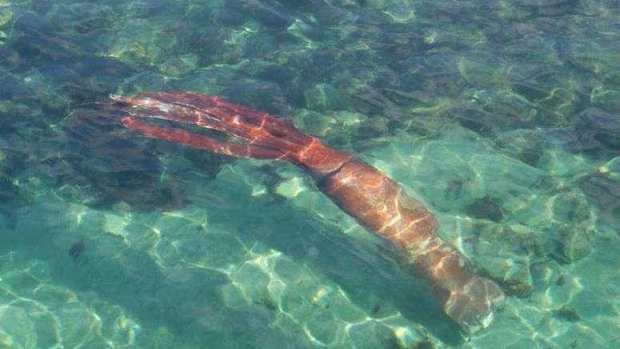 El 'kraken' gallego