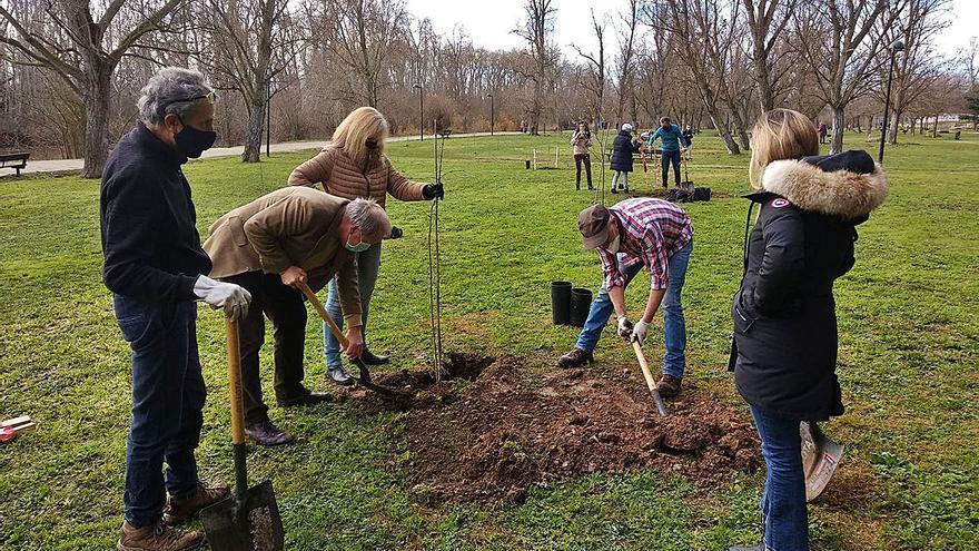 Una nueva plantación revitaliza el parque de Los Tres Árboles en Zamora