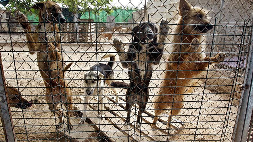 La Ribera y la Safor se alían para gestionar la recogida de animales