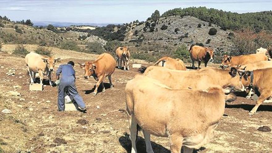 El norte de Castellón, el más castigado por la sequía de la Comunitat