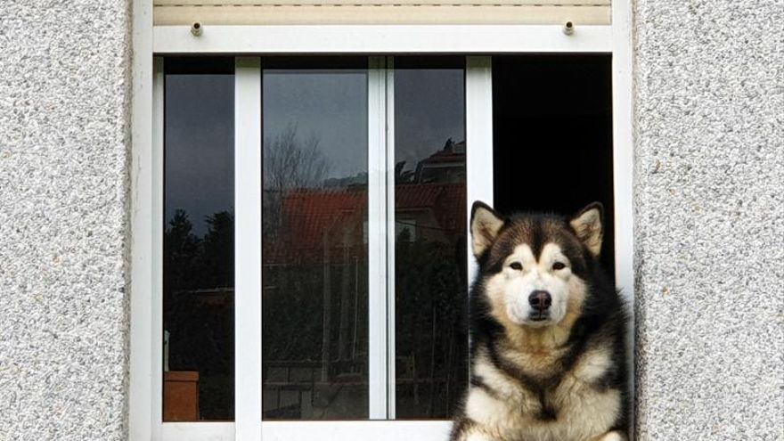 Veto total a las mascotas en los pisos de alquiler del Baixo Miño