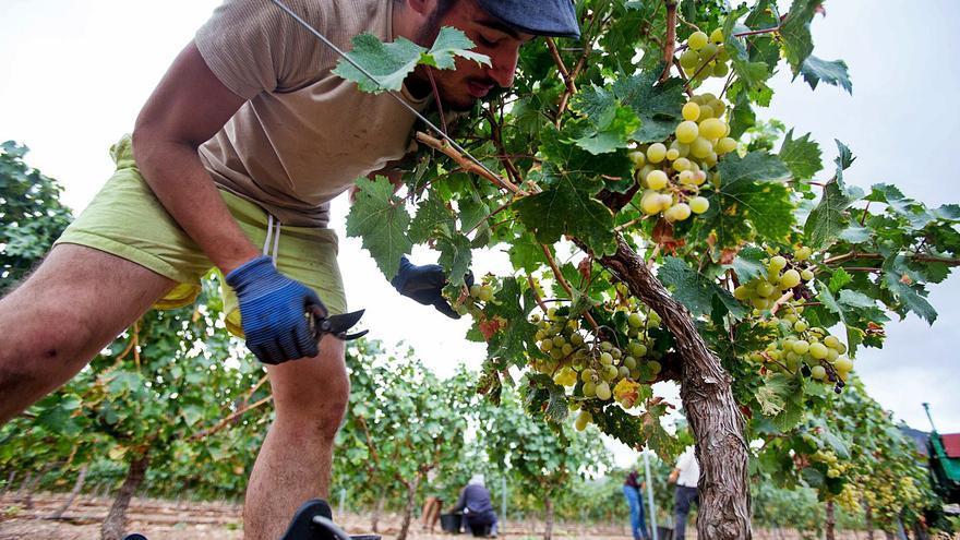 Optimismo en el sector del vino: los productores confían en mejorar sus ventas a pesar de la reducción de la cosecha