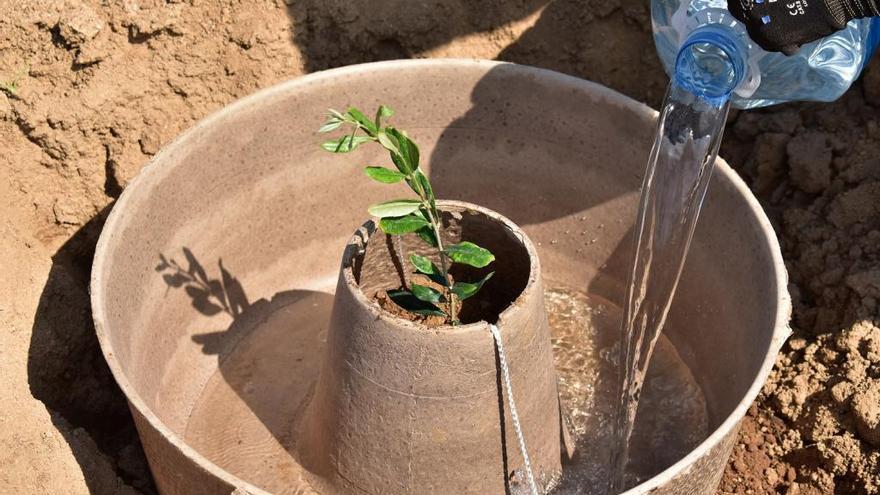 El cocoon, una eina pensada per  millorar l'eficàcia de les reforestacions