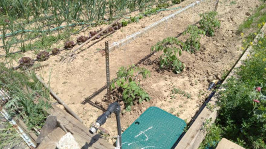 Denuncian el robo de plantas y herramientas en los huertos urbanos de Benavente