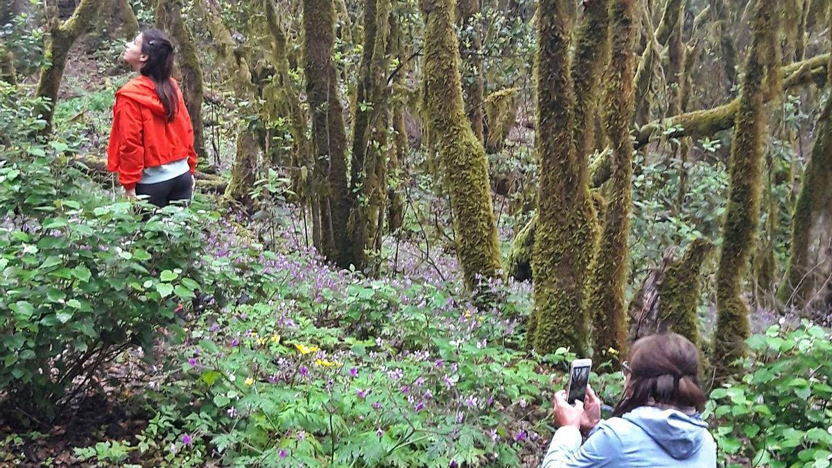 Imagen del bosque de El Cedro | | E.D.