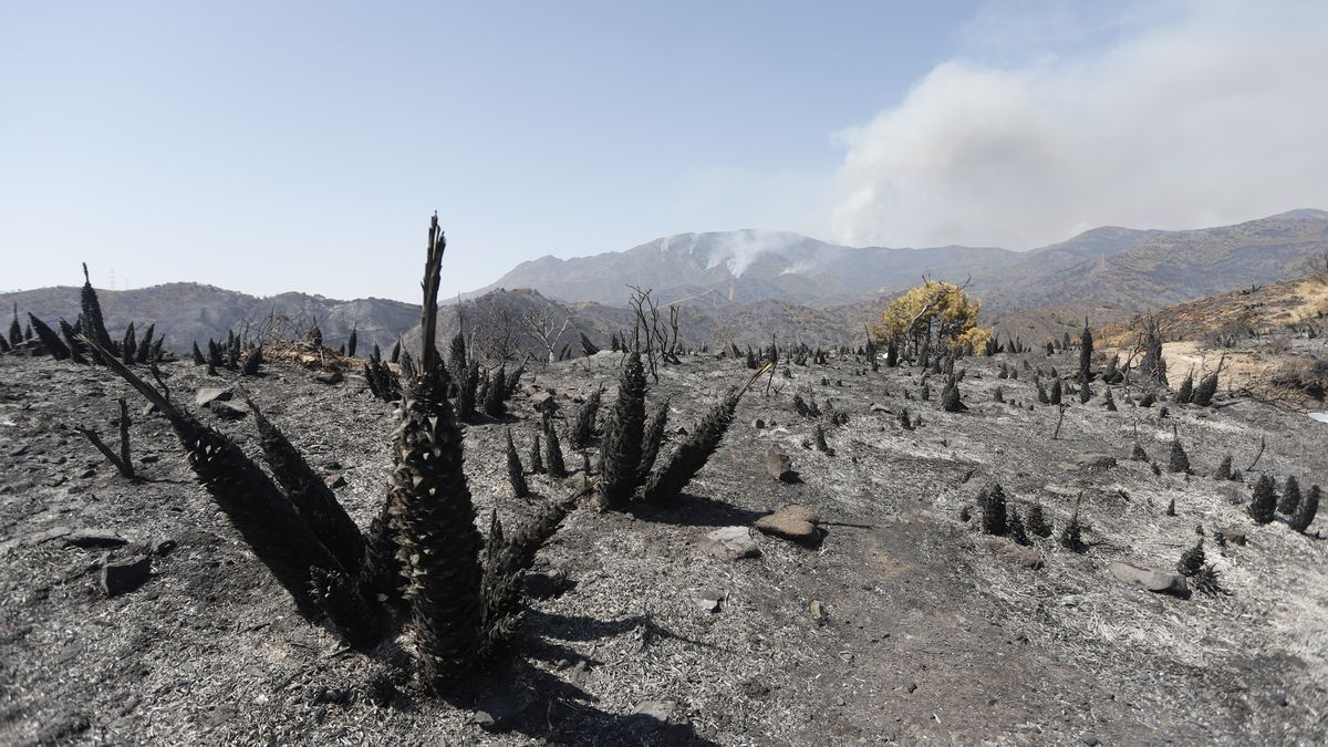 El fuego ha calcinado ya más de 7.780 hectáreas