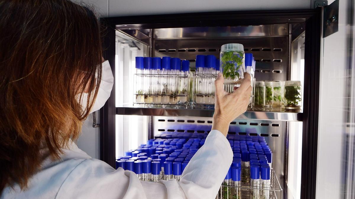 Un total de 34 investigadores de la UMA, entre los más citados del mundo según la Universidad de Stanford
