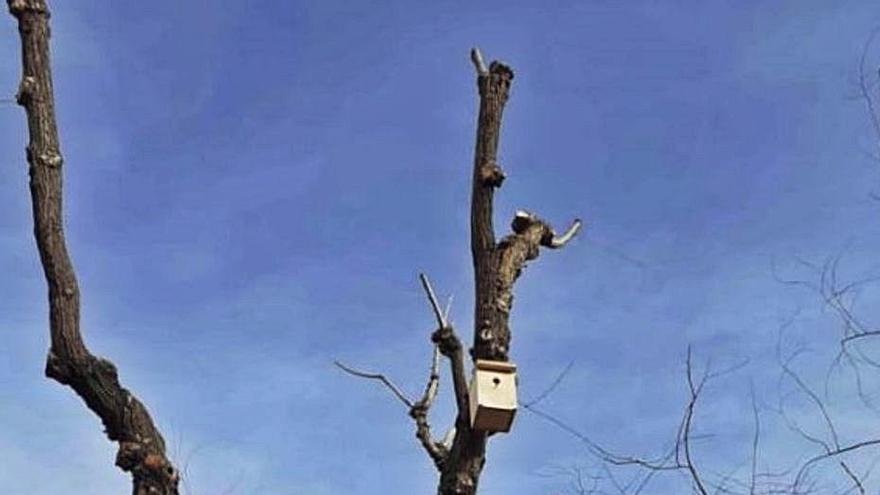 Igualada instal·la 40 caixes niu en arbres per millorar la biodiversitat