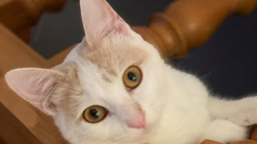 Una bergondesa denuncia que mataron de un balinazo a su gata cuando jugaba en el jardín