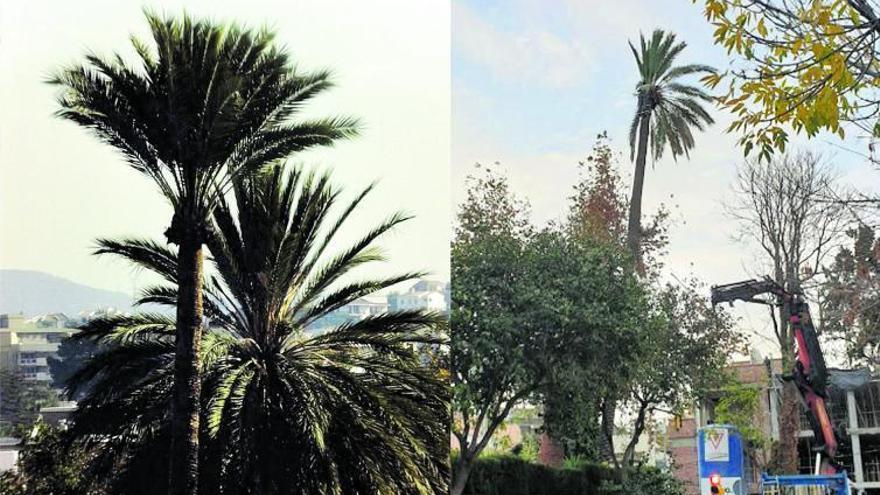 Las palmeras perdidas del ingeniero cubano