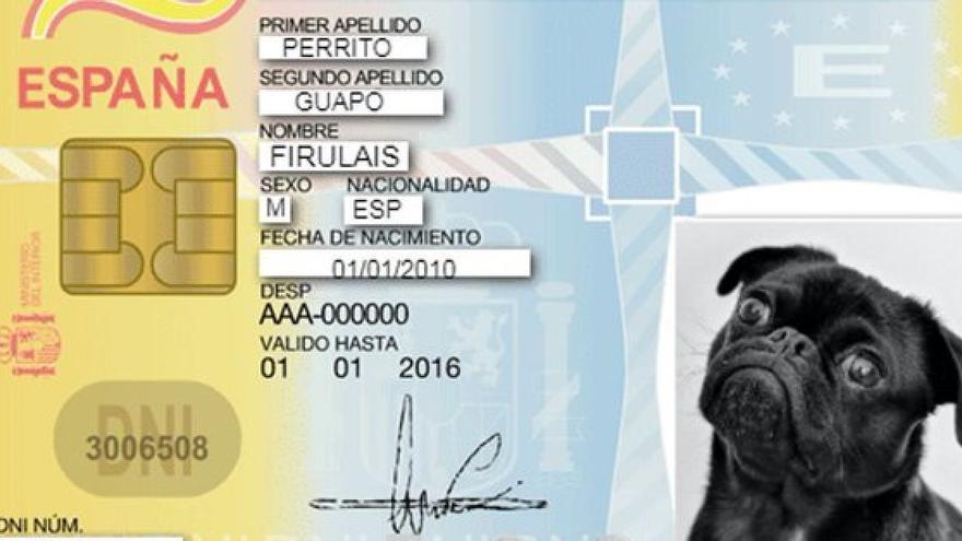 DNI para mascotas, cuándo será obligatorio, qué datos tendrá y que animales tienen que tenerlo