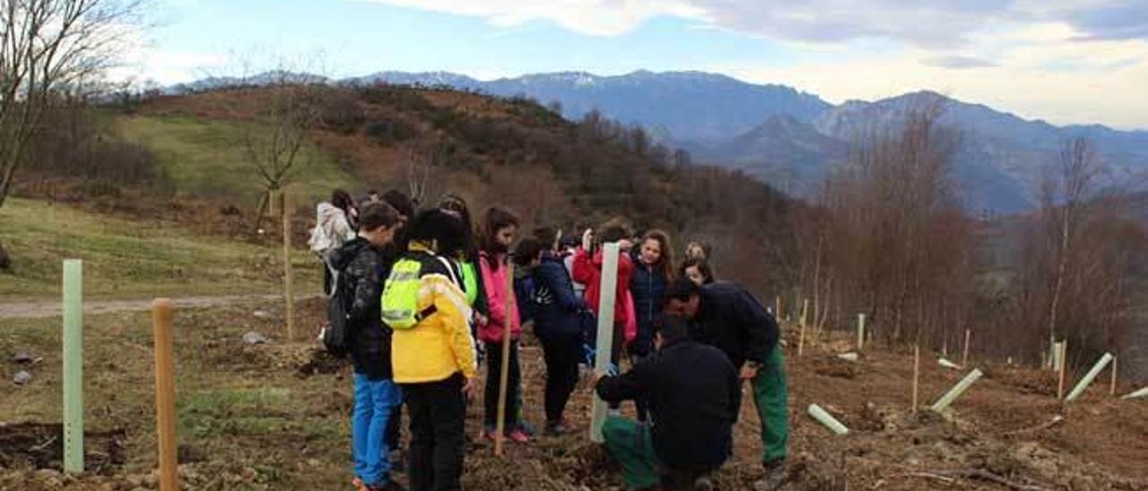 Escolares plantando árboles, ayer, en el monte La Teyerona.