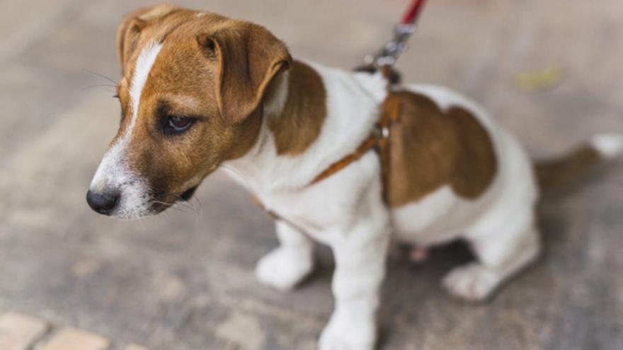 La campaña de control de animales de compañía se salda con 43 denuncias
