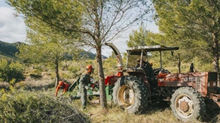 La Comunidad realiza trabajos de regeneración de masas forestales incendiadas en montes de Calasparra y Cieza