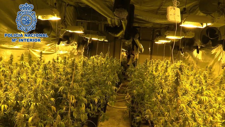 Desmantelada una organización criminal dedicada al suministro de planteles de marihuana