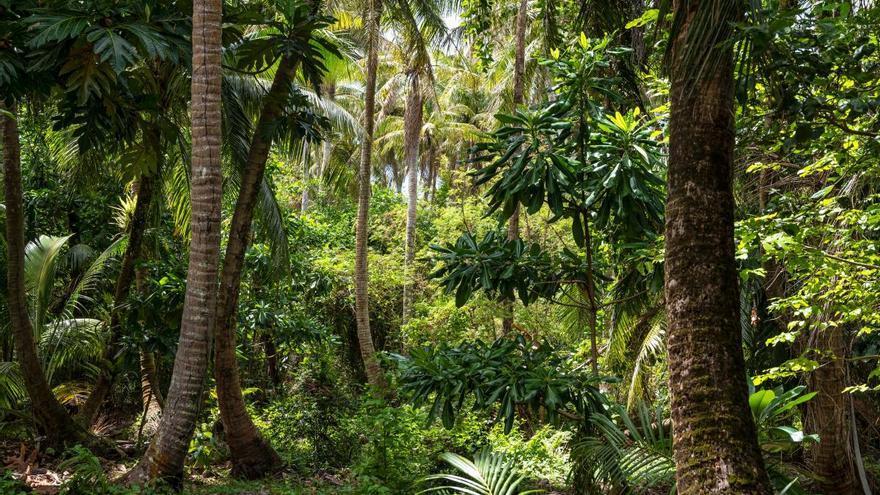 Los árboles tropicales acortan su vida cuando están por encima de los 25 grados