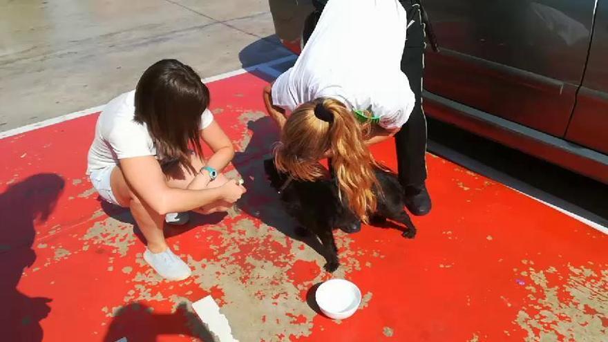 Rescatan a un perro del interior de un coche a pleno sol en Alicante