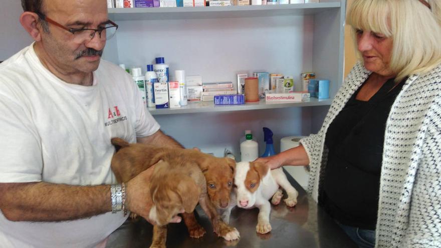 Juntos por la defensa del derecho animal en Orpesa