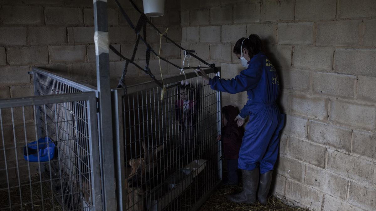 Mujer rural, en la provincia de Zamora.