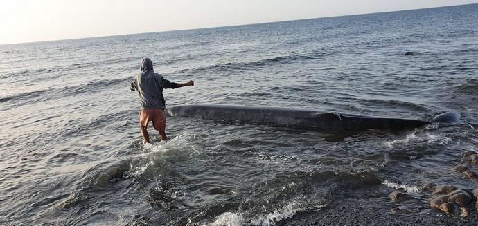 Una ballena muerta aparece varada en la costa de Tuineje