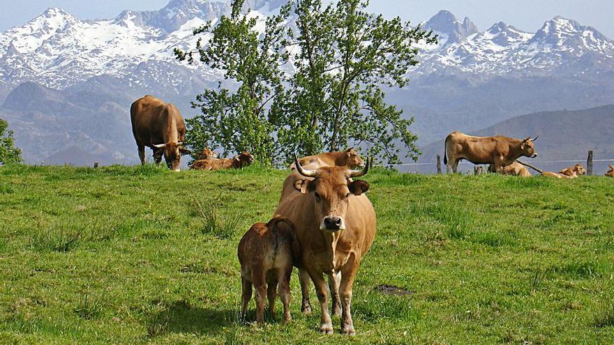 Asturias, la única región de Europa que aún no ha tramitado las ayudas de la PAC