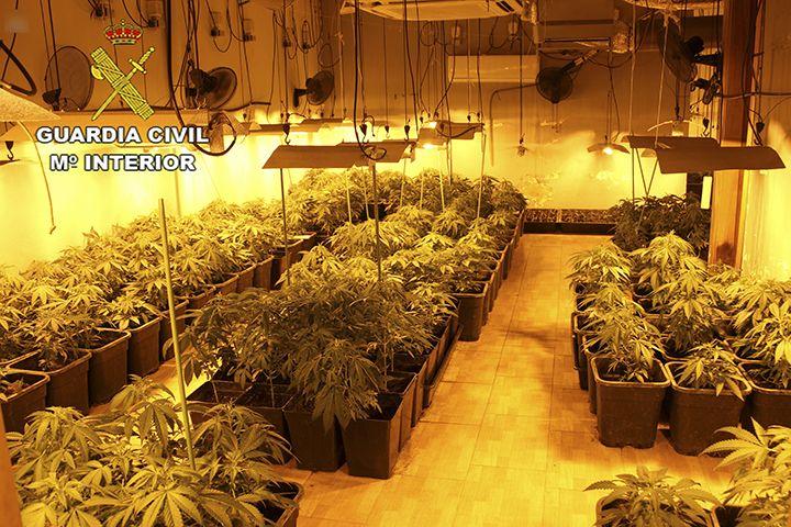 Troben un cultiu de marihuana al garatge d'una casa de Maçanet de la Selva
