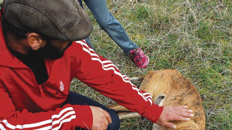 El dueño de los galgos muertos a tiros muestra las heridas de la perra agonizante.