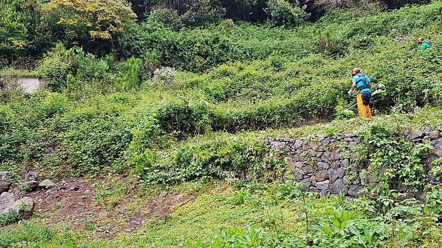 El Cabildo refuerza la recuperación de fincas públicas agrícolas