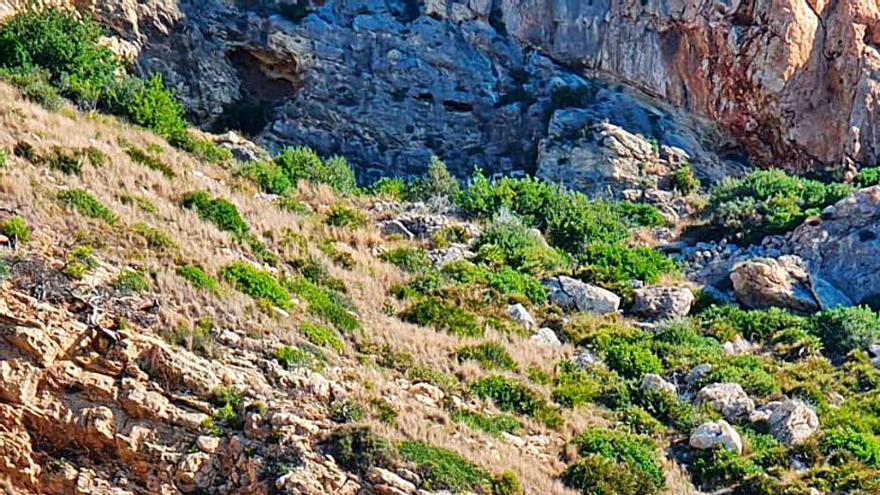 Ecologistas piden que se prohíba la pesca en la reserva del Cap de Sant Antoni