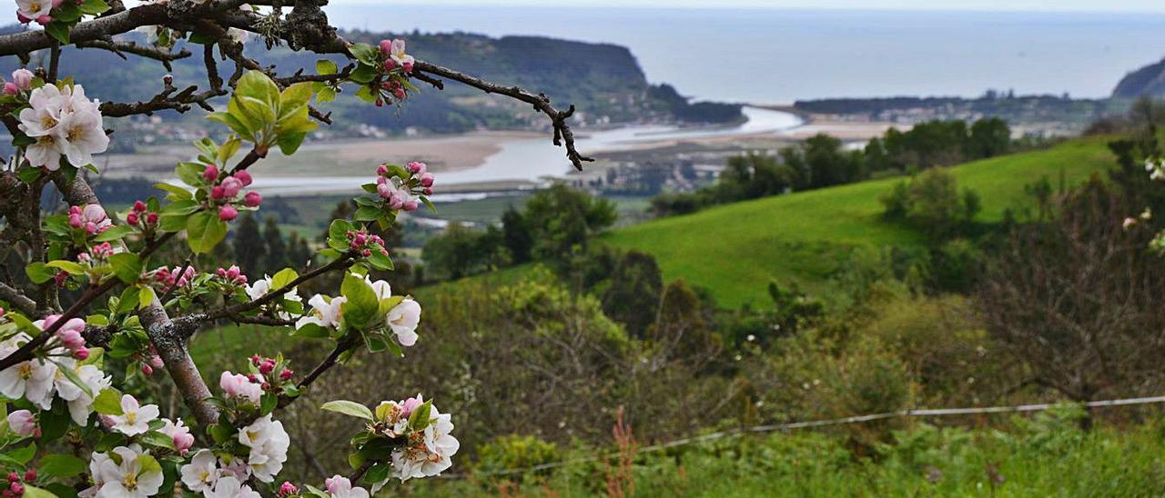 Panorámica de la ría de Villaviciosa, desde uno de los altos con pomaradas en flor.   O. P.