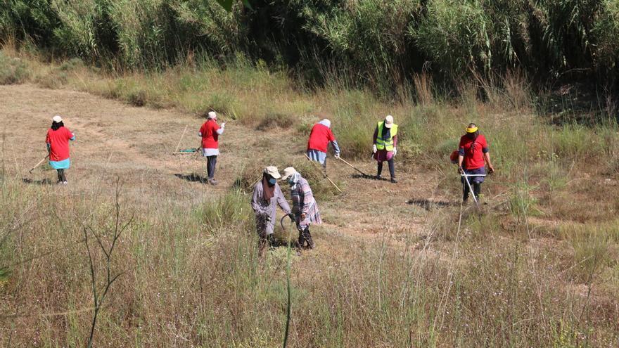 L'Alcúdia contrata a 154 parados agrícolas para limpiar barrancos