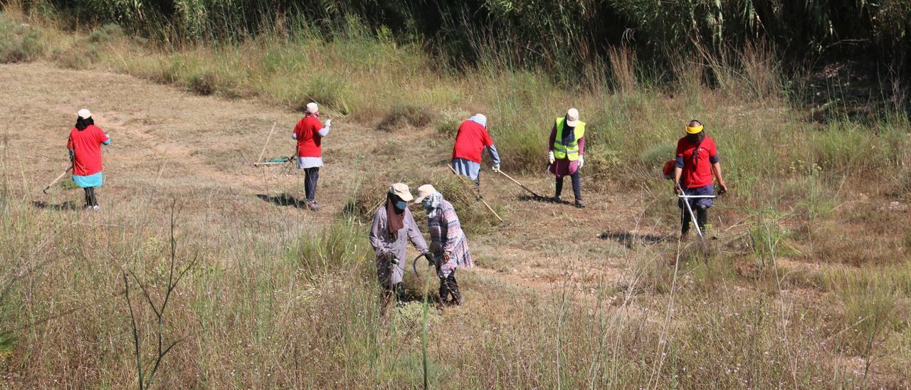 Un grupo de operarios trabaja en la limpieza de un barranco.