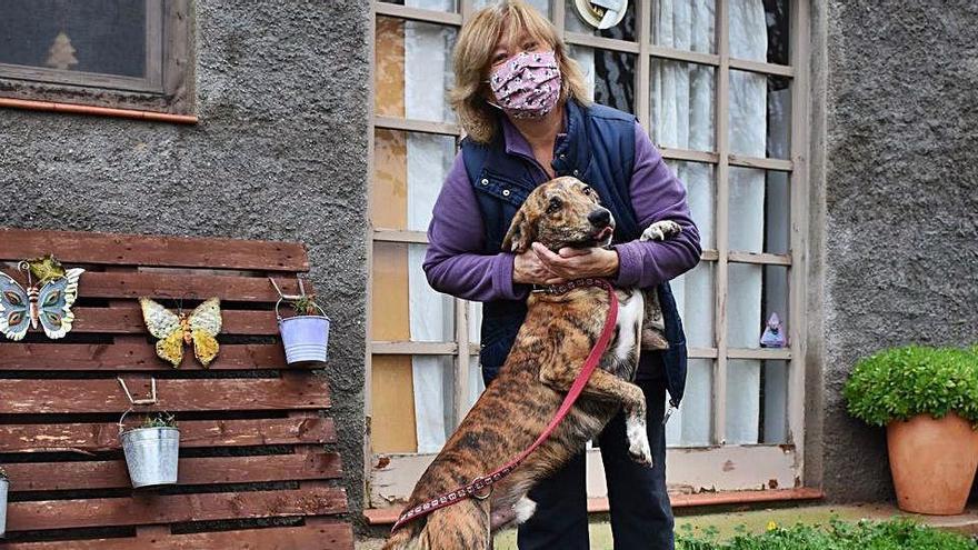 La pandèmia fa créixer l'interès per tenir una mascota a casa