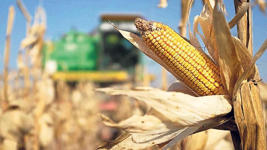 Lonja de Zamora | El precio del cereal no toca techo