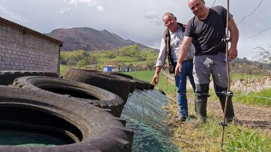 La granizada echa a perder cientos de kilos de forraje para animales en Parres