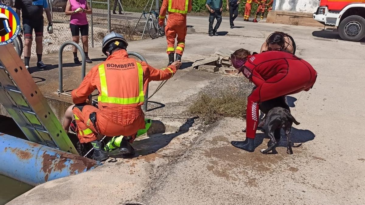 Bomberos rescatan a un hombre y su perro tras caer a una acequia en Riola (Valencia)