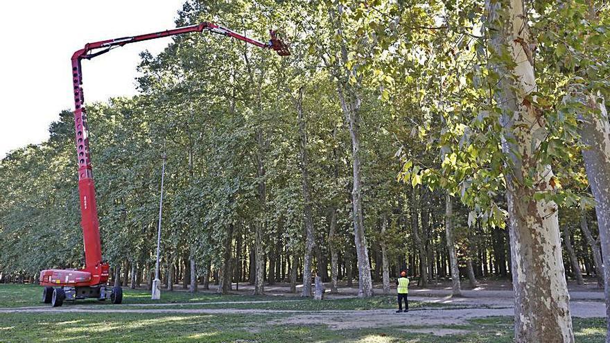 Poda d'alçada al parc de la Devesa abans de les Fires