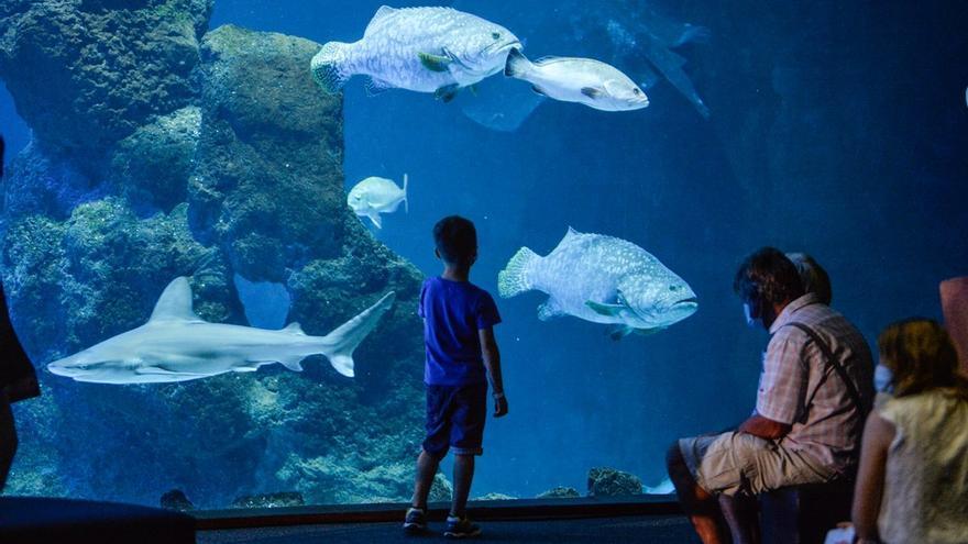Los turistas visitan el acuario Poema del Mar