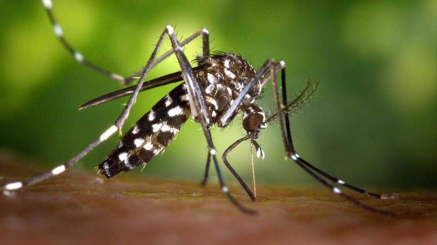 La crisi climàtica exposa Europa al mosquit de la malària