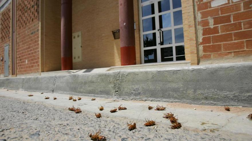 Sagunt inicia el tratamiento contra cucarachas y ratas en la avenida Mediterráneo y adyacentes