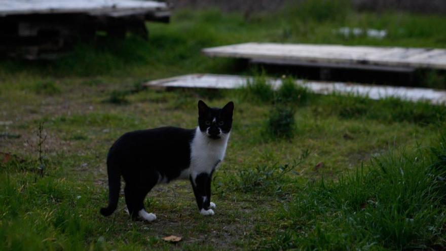 Denuncian el presunto envenenamiento deliberado de gatos con salchichas