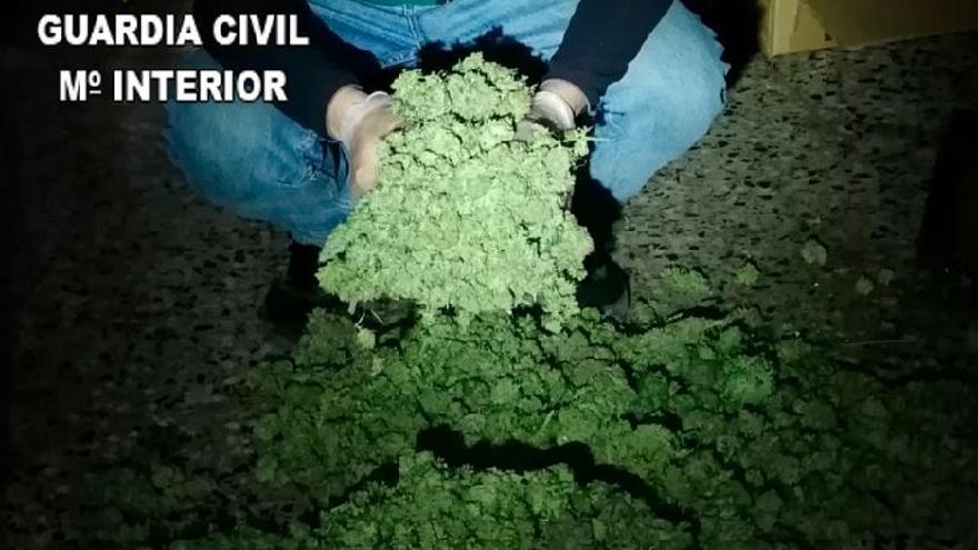 Desarticulada una organización en Corbera dedicada al cultivo de marihuana