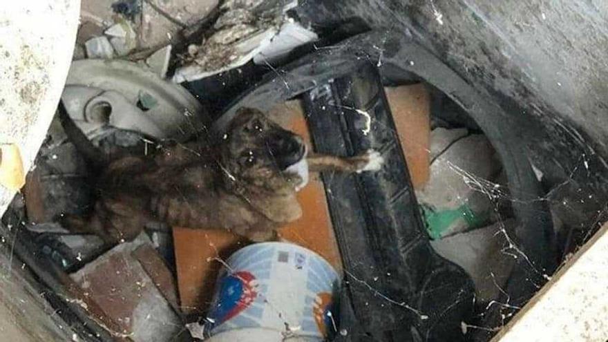 Demanen vuit mesos de presó per a un home acusat d'abandonar el seu gos en un forat d'un magatzem