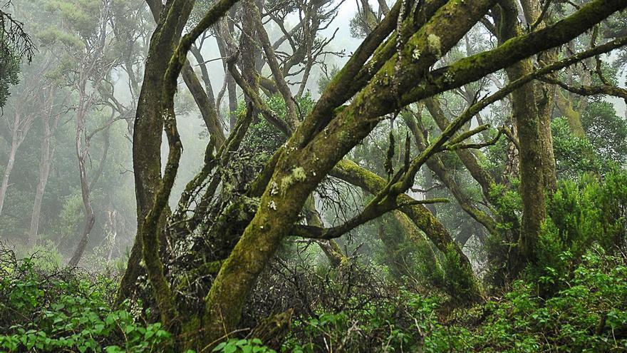 Acuerdo para implantar el 'Proyecto Ojeadores' en hábitats de interés natural