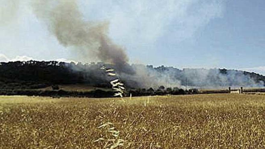 Un incendio arrasa una zona de cultivos