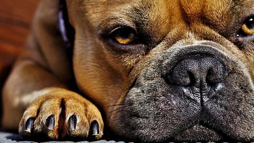 ¿Pueden los perros estornudar hacia dentro?