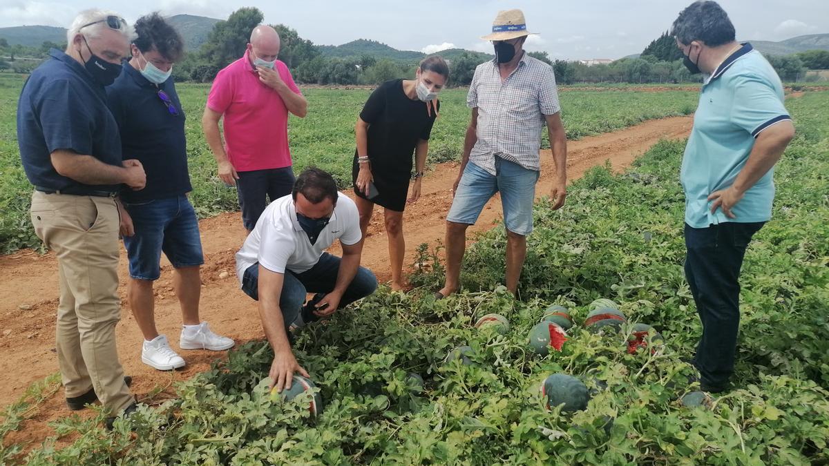 El alcalde de Peñíscola, Andr´és Martínez, visitó ayer cultivos destrozados por el granizo en ese municipio.